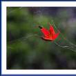 落ち葉紅葉