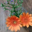 菊とガーベラ