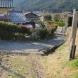 24 梅谷道から比叡5山縦走 2018.03.17