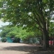 赤堀川公園 トイプードル散歩
