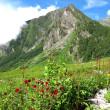 インド  花の谷 ( Valley of Flowers )
