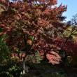 瀬高の清水寺からp7(本坊庭園3)ラスト