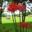 今日は田舎へ帰っていました・・・鹿児島の風景