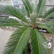 ハワイアン植物展 鶴見緑地