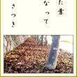 落ち葉の布団