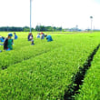 紅茶塾DAGUの遠足