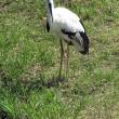 葛西臨海水族園で見た「丹頂鶴」