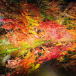 菊と紅葉まつり2017