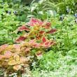 夏季限定花壇