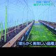 4/23 Dash村 香川のこの長いアスパラを見てよ