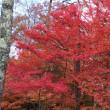 瑞宝寺の紅葉