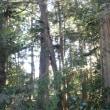 JR川越線「武蔵高萩」駅~東武東上線「東松山」駅。その1。(「日光千人同心街道」をゆく。第3日目。)