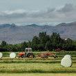 アイスランド(Iceland): Icelandic Hay