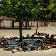 2018 ひびき動物ワールドのカンガルー  (木陰に沿って寝そべって) 《北九州市若松区響灘緑地》
