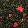 苔に落ち葉art。