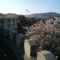 花吹雪の午後