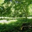夏めく妻女山陣場平でハルジオンの除去と山蕗刈り。北アルプスパノラマ(妻女山里山通信)
