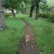 アズキと散歩@運動公園