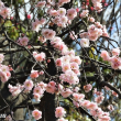 羽根木公園「第42回せたがや梅まつり」華やかに!!