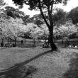 西公園 No.6  (中央区)