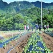 春の農業体験ツアーの1日目