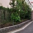 街歩き 第75回 『炭団坂と坪内逍遥旧居・常盤会跡』