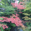 多摩の木々も徐々に色づいてきました