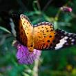 自然教育園日記 その105 接写リングの活躍―4