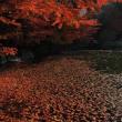 徳川園の紅葉 ②