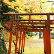 雨上がりの黄葉(導觀稲荷神社)