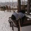 お山へGO!『旭山記念公園』