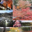 京都散策・・・紅葉素晴らし~~心に残り・・・