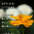 幸せの花。。。