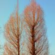 春を待つ木々たち