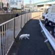 新宿シティハーフマラソンに向け地味にトレーニングしています
