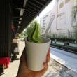 散策!山形(5) 水の町屋七日町御殿堰で岩渕茶舗のソフトクリームをいただく