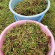 芝生にびっしり生えている雑草処理