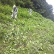 交通安全協会との道路草刈り作業