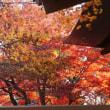 紅葉も最盛期・・日本の秋は最高、清少納言も絶賛。!!