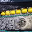 初めてのまき網による表層魚  アイスランド