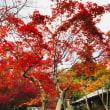 箕面滝道の紅葉☆