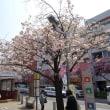 桜新町駅前の桜並木