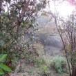 霧の庭散歩