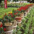 家庭花壇 H30-08-10 ㈮ 曇