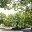 月曜の新緑公園。