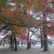 深く深く秋へ