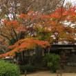 埼玉県川越市 食パンと中院の紅葉 2017年11月18日