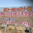 鴻巣ポピー畑