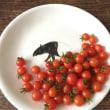 小さくてもトマト