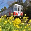 渥美線と菜の花、其の五